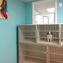 FoxyDogs-Dog-Grooming-Minneapolis-Kennels-Thumb